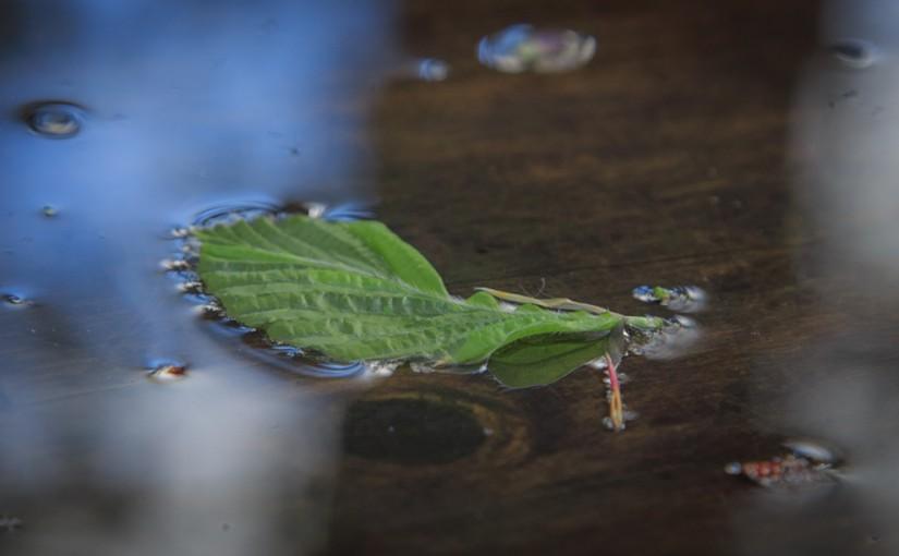 Intimacy leaf