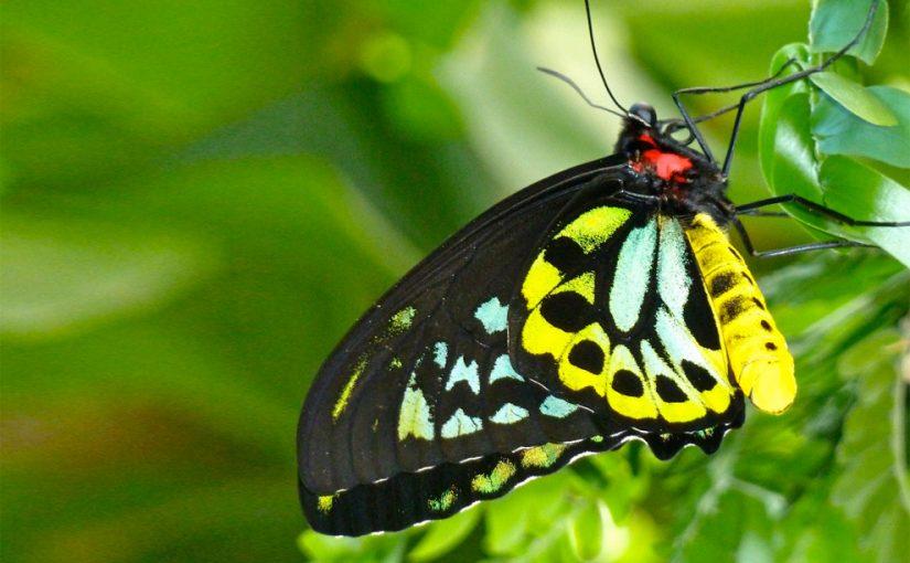 butterfly on a branch, photo by KRaschke