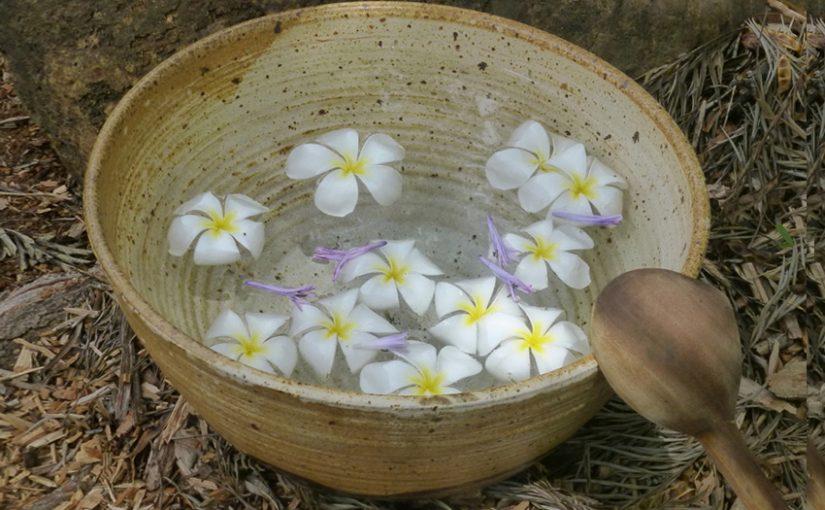 Flower petals floating in water bowl by KRascke