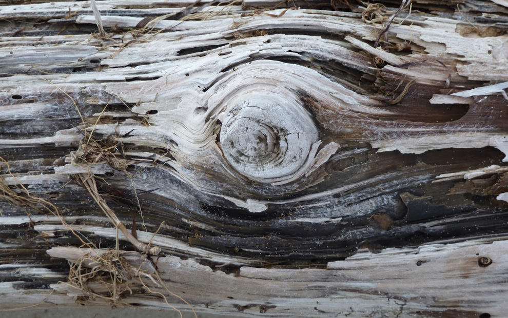 old felled tree, photo by KRaschke