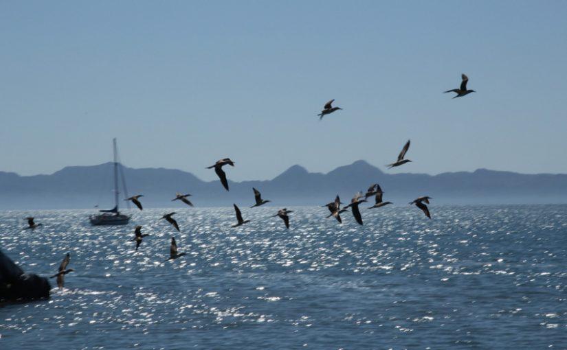 Seagulls, photo by NCDunham